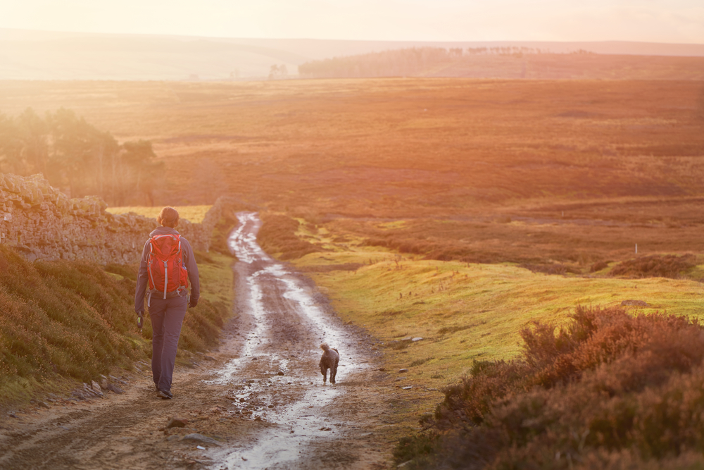 top-ten-dog-friendly-walks-in-the-peak-district